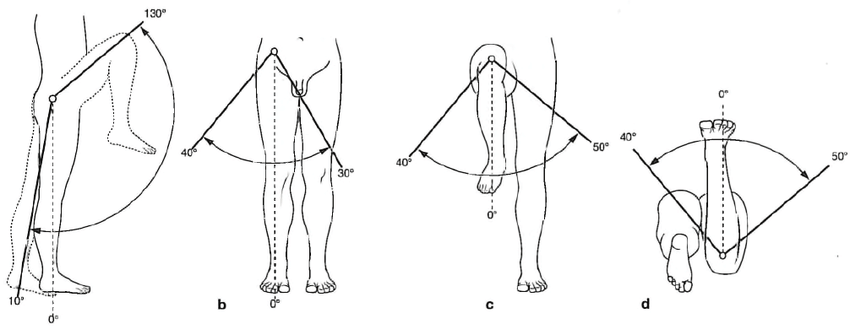 The range of movements in the hip joint: a-flexion