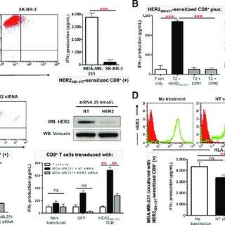 (PDF) CD4+ T-helper Type 1 Cytokines and Trastuzumab