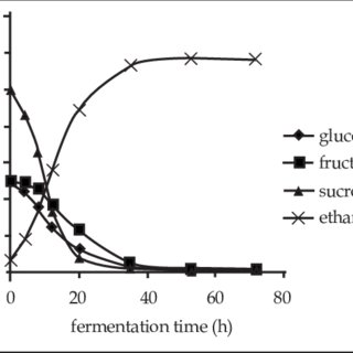 Biomass growth of yeast cells during fermentation of sugar