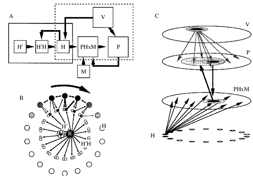 Hypothetical organization of the path integration system