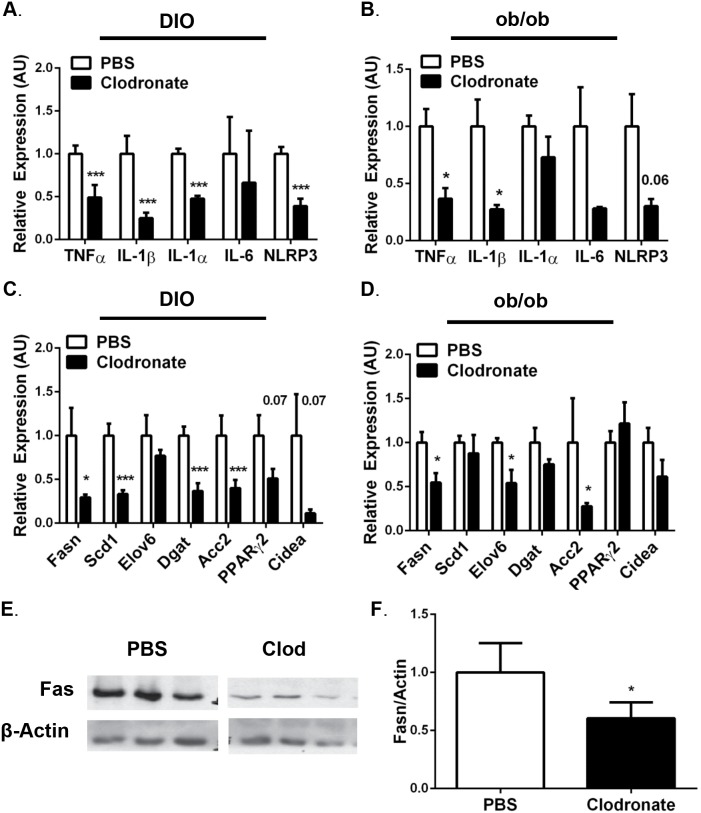 Wild type mice fed a HFD for 13 weeks or 8-week ob/ob mice