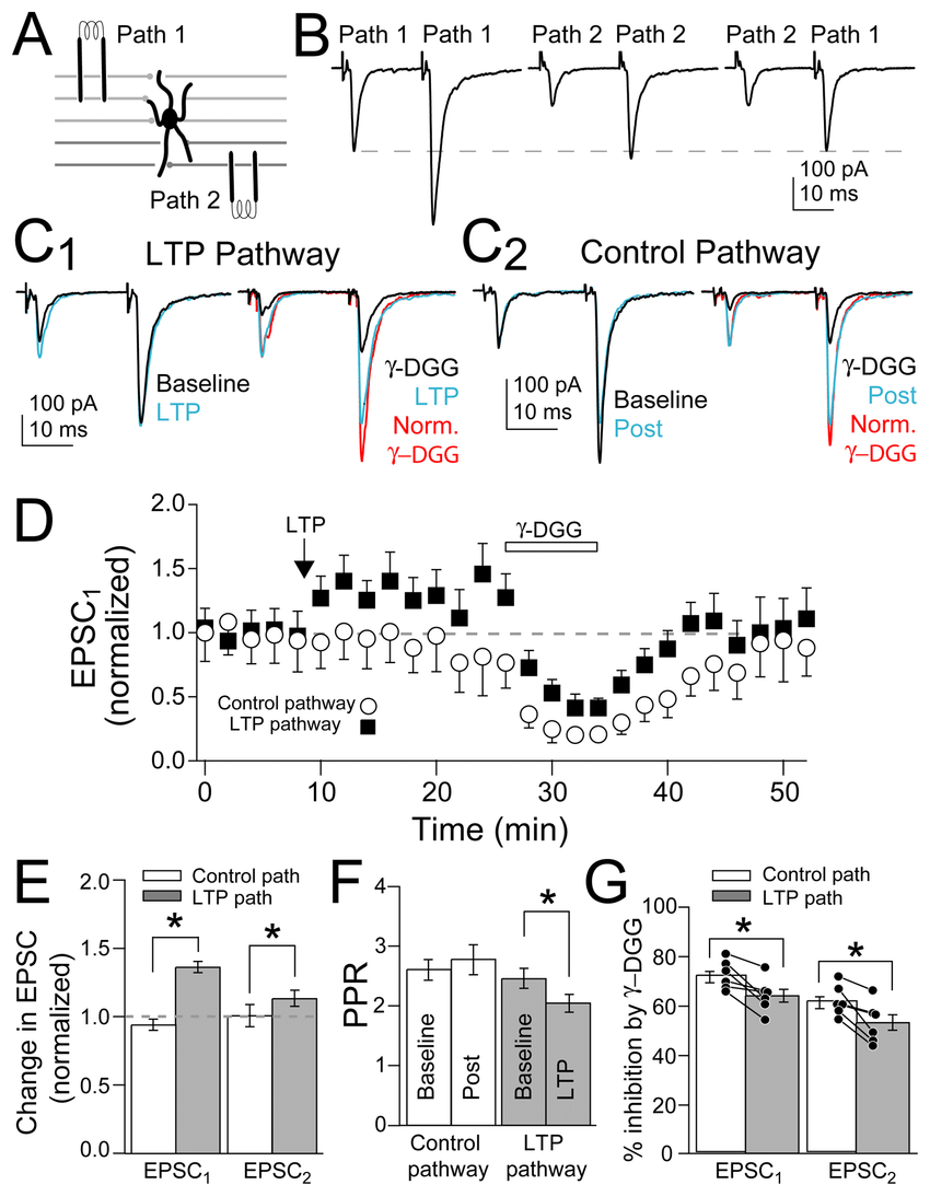 medium resolution of mvr increased after presynaptic ltp induction a schematic of independent pf pathway stimulation onto mli