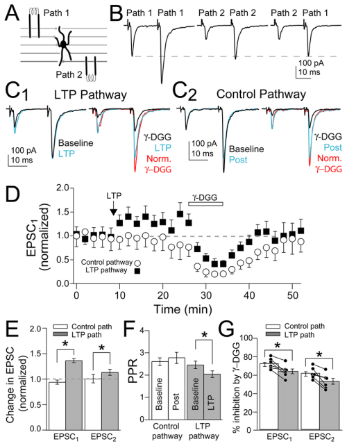 small resolution of mvr increased after presynaptic ltp induction a schematic of independent pf pathway stimulation onto mli