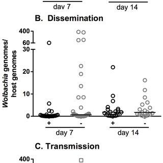 (PDF) Wolbachia Enhances West Nile Virus (WNV) Infection