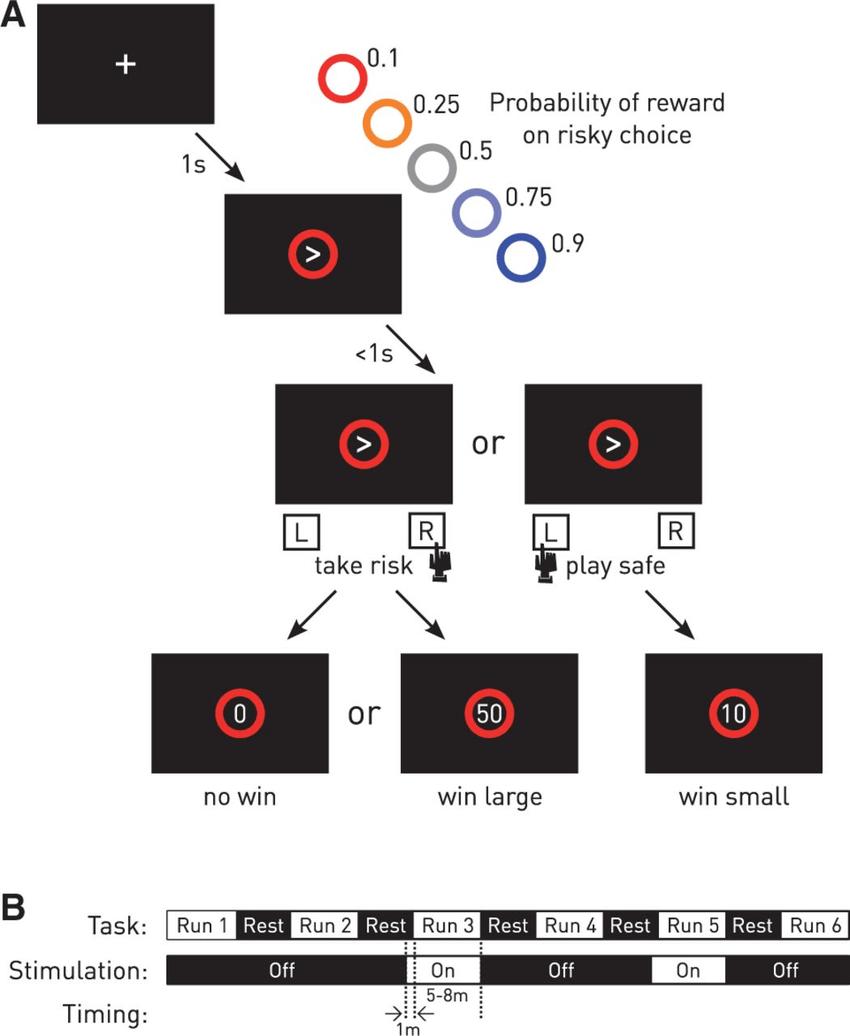 Figure 2 Experimental design. (A) Risky decision-making