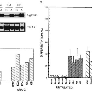 OA inhibition of PB-dependent increase in the CAR-NR1