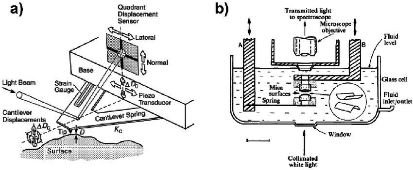 Schematic drawings of ( a ) an atomic force microscope
