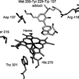 (PDF) An Oxyferrous Heme/Protein-based Radical