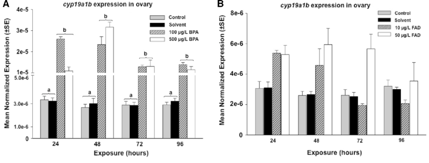 Effects of Bisphenol A and Fadrozole Exposures on cyp19a1