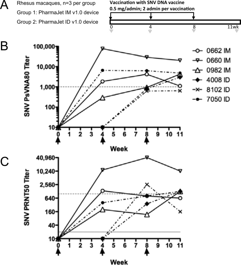 Hantavirus DNA vaccine delivered to NHP using PharmaJet IM v1.0 or ...