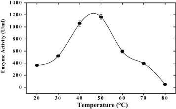 Effect of temperature on the enzyme activity. The optimum