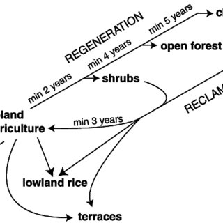 Diagram of the land allocation procedure and the role of