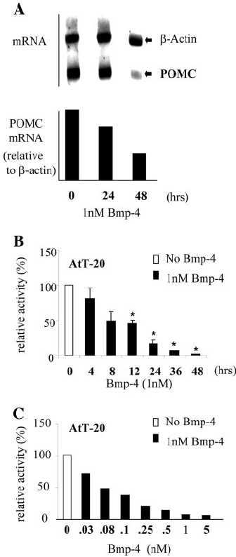 BMP4 Represses POMC Expression and Promoter Activity A