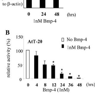 Inhibitory Smad6 and Smad7 Reverse BMP/Smad- Dependent