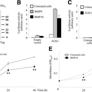 BMP9 activation of the BRE promoter is specific for ALK1