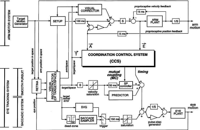 Block diagram of the model. The lower part shows the eye
