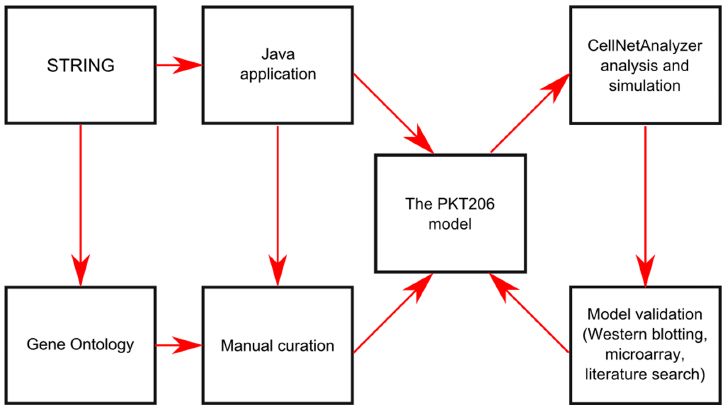 Flow chart of PKT206 logical model construction and