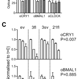 (PDF) Implication of the F-Box Protein FBXL21 in Circadian