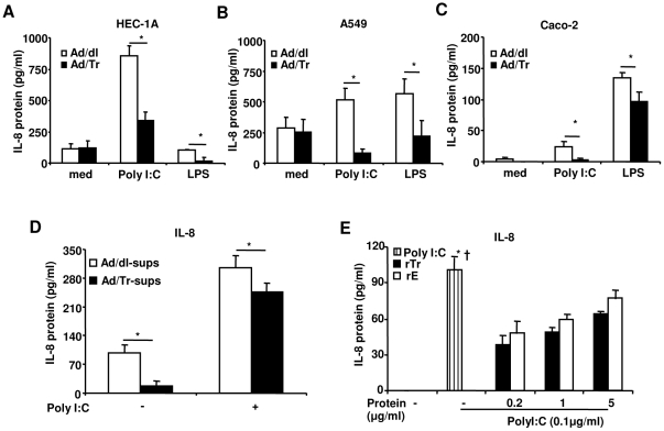 Secretion of IL-8 in supernatants from HEC-1A (A), A549 (B