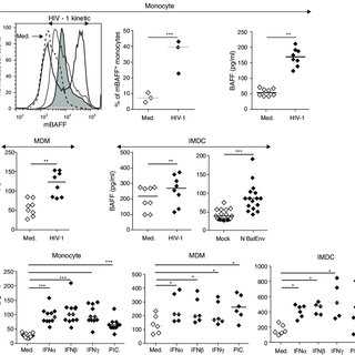 Myeloid cells produce BAFF in response to HIV-1 and type I