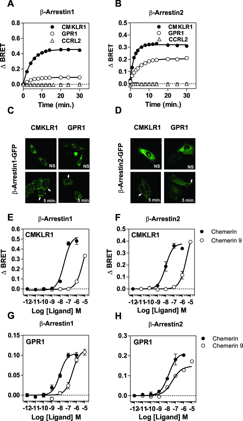 Recruitment of β-arrestins by CMKLR1 and GPR1. A. Real