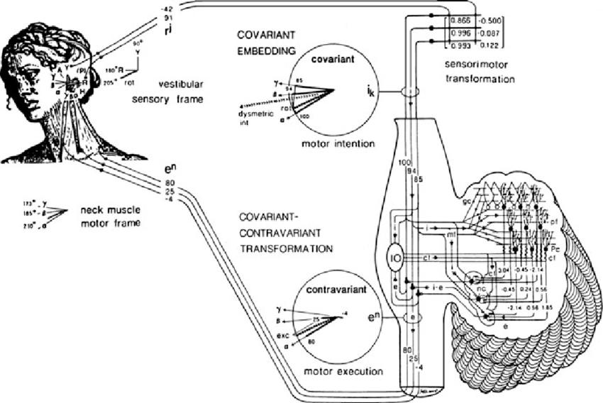 4 Tensor network model of the vestibulocollic reflex