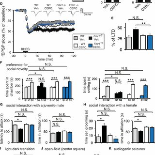 Mmp9 Is a Critical Target of Phospho-eIF4E-Dependent