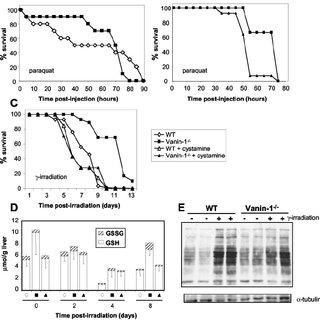 Vanin-1 as a sensor of oxidative stress. The Vanin-1 gene