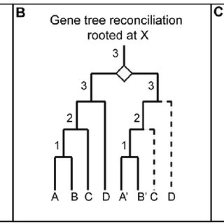 Eukaryotic guide trees used in the analysis. The