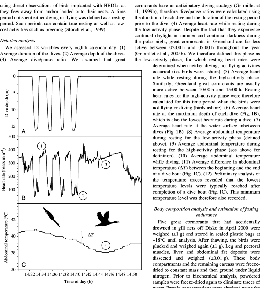 medium resolution of  a dive patterns b heart rate and c abdominal