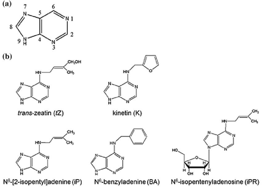 Chemical structures of cytokinins and its basic structure