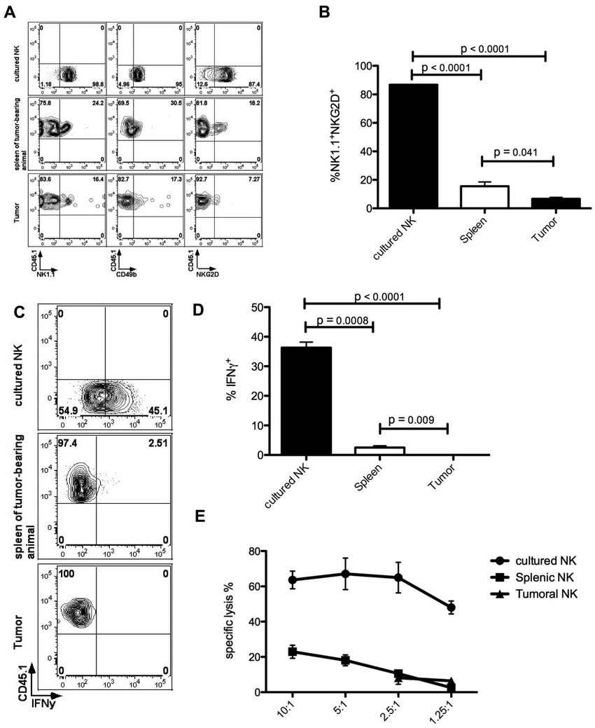 Tumor-infiltrating NK cells down-regulate activating