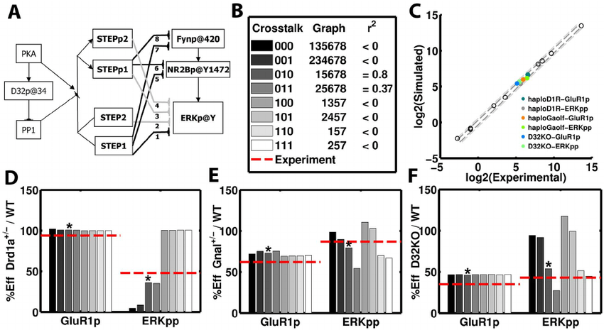 The effect of mutants on APA-induced ERK activation and