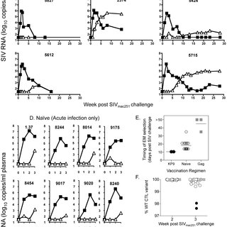 (PDF) Timing of Immune Escape Linked to Success or Failure