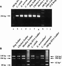 molecular identification of cyclospora like species in chicken dog download scientific diagram [ 850 x 1113 Pixel ]
