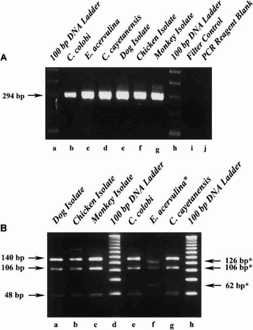 small resolution of molecular identification of cyclospora like species in chicken dog download scientific diagram