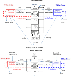 schematic of the biologically based lactating mother and nursing infant model for thyroid hormone homeostasis from [ 850 x 987 Pixel ]