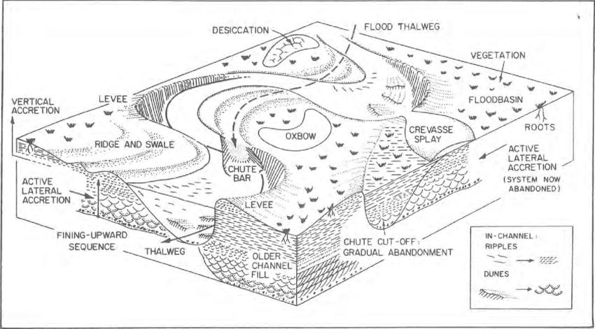 Block diagram showing morphological elements of a