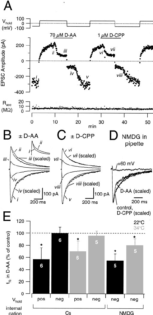 Neuronal glutamate transporters limit activation of NMDA