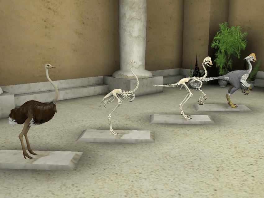 ostrich skeleton diagram 2002 nissan sentra power window wiring and 3 line up of oviraptor in