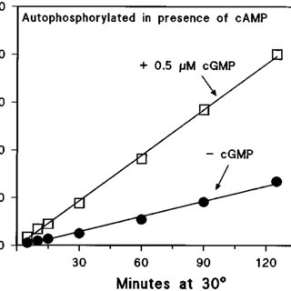 A proposed role for cAMP in Mycobacterium tuberculosis