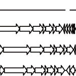 (PDF) Methyltransferases acquired by lactococcal 936-type