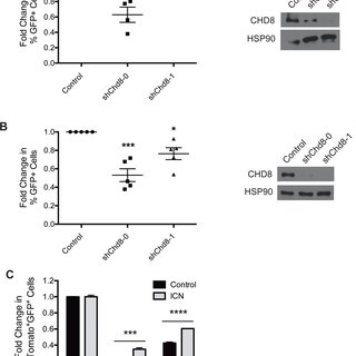 CRISPR-Cas9 editing of CHD8 is detrimental to B-ALL cells
