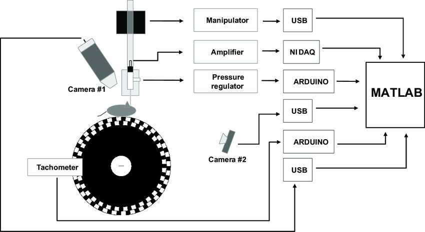 Schematic overview of the system. A head-fixed mouse runs
