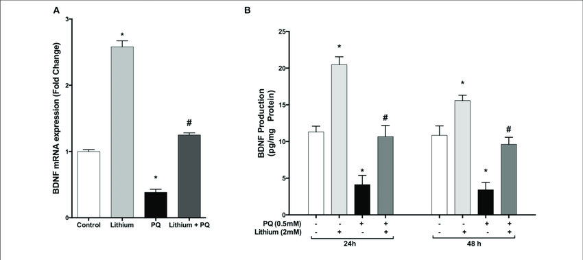 | Lithium increases BDNF expression and secretion in SH