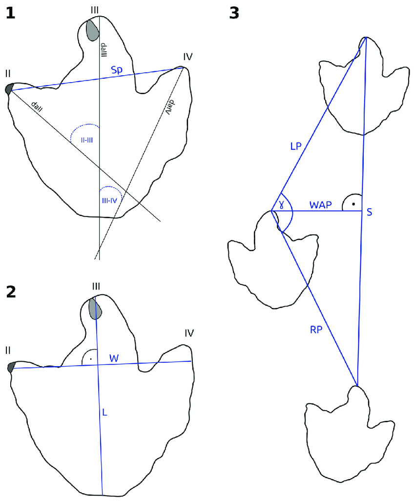 medium resolution of schematic outline drawings based on footprint dfmmh fv 644 from the langenberg tracksite