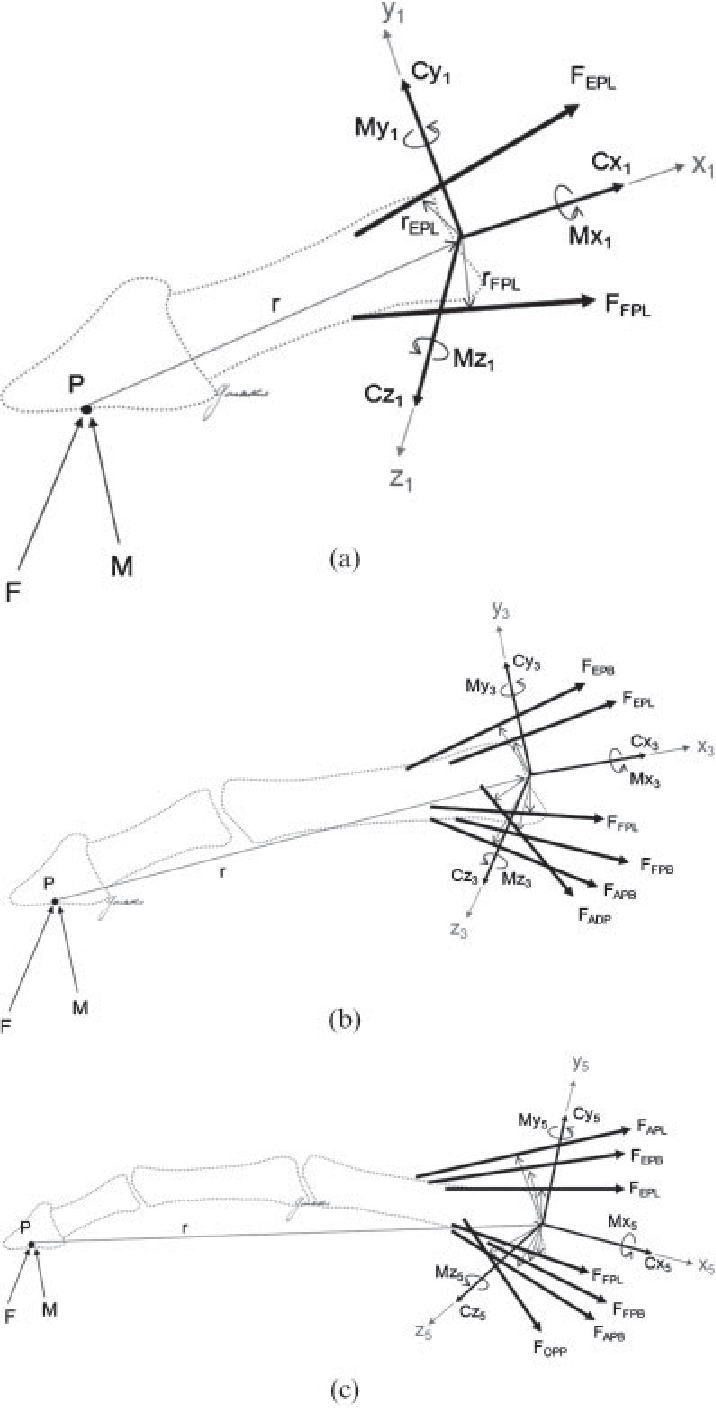 hight resolution of free body diagram of the finger distal to a the ip joint