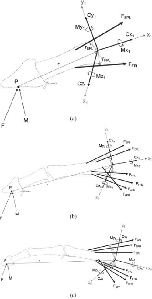 small resolution of free body diagram of the finger distal to a the ip joint