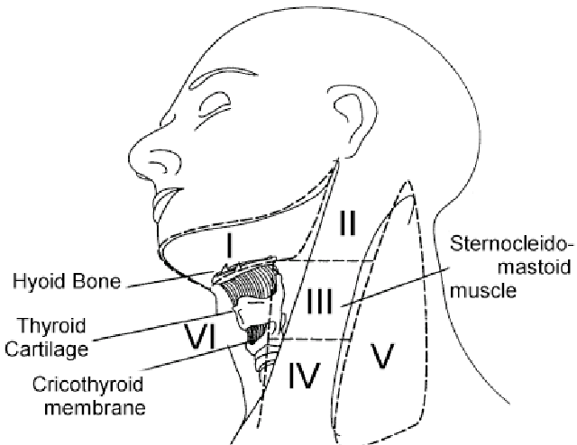 Lymph node levels of the neck, as first defined and