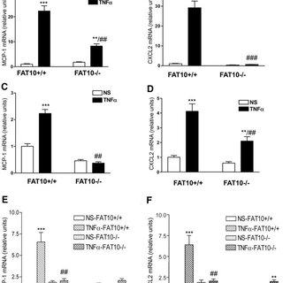 (PDF) The ubiquitin-like protein FAT10 mediates NF-κB